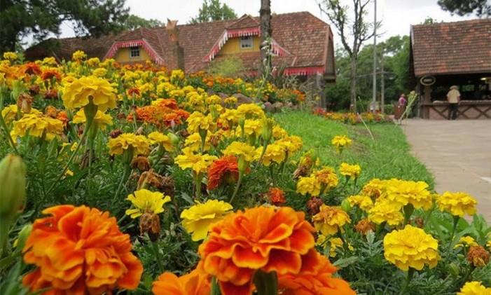 Flores em Gramado Foto: Flickr / Reprodução