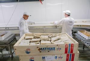 Produção e embalagem do bacalhau na fábrica Mathias, em Alesund Foto: Marius Fiskum / Divulgação