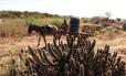 Homem procura água em Monteiro (PB)