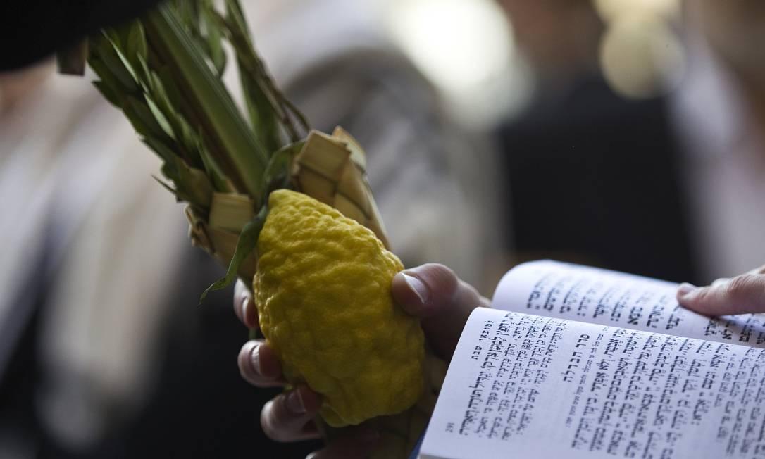 """Em adoração, um religioso segura as quatro espécies de plantas como deduzido no texto sagrado, e pela tradição: """"a fruta de árvore formosa"""", a cidra; """"ramos de palmeiras"""", ramos da tamareira; """"ramos de árvores frondosas"""" referindo-se ao mirto; e """"salgueiros de ribeira"""" o familiar salgueiro. Essas quatro espécies formam o molho de sucot RONEN ZVULUN / REUTERS"""