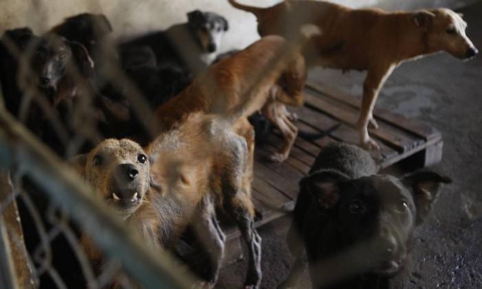 Maus tratos animais Foto: Gustavo Stephan / Agência O Globo