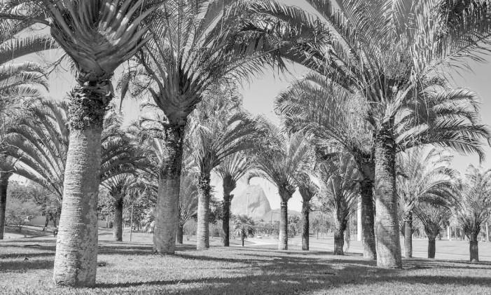 Uma das fotografias da exposição mostra palmeiras com o Pão de Açúcar ao fundo Foto: Divulgação / Jardim de Memórias