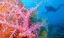 Recife de corais: a base da vida marinha Foto: Latinstock