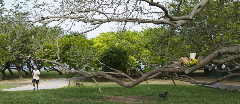 Mulher se apoio no tronco de uma árvore para ler um livro no Parque do Flamengo, que completa 50 anos Foto: Daniel Marenco / Agência O Globo
