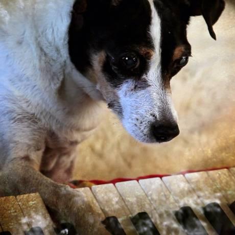 Lolabelle, cadela de Laurie Anderson e estrela do documentário 'Coração de cachorro' Foto: Divulgação / Divulgação