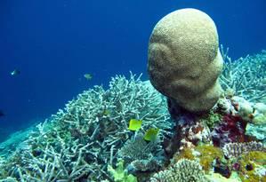 Corais e mariscos podem ser um dos mais afetados Foto: ROD SALM / AFP