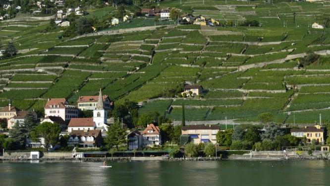 Vinhedos nos terraços de Lavaux, nos arredores de Cully, às margens do Lago Léman Foto: Cristina Massari