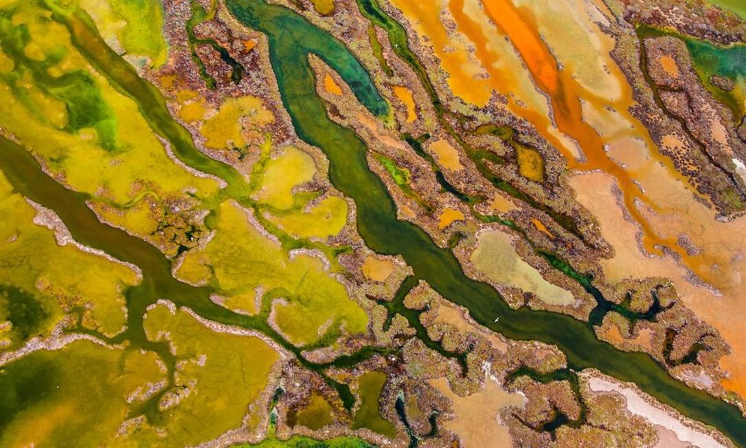 """Em """"foto aérea"""", o vencedor por Pere Soler com uma imagem das algas nos pântanos do Parque Natural da Baía de Cádiz, na Espanha Pere Soler / Wildlife Photographer of the Year 2015"""