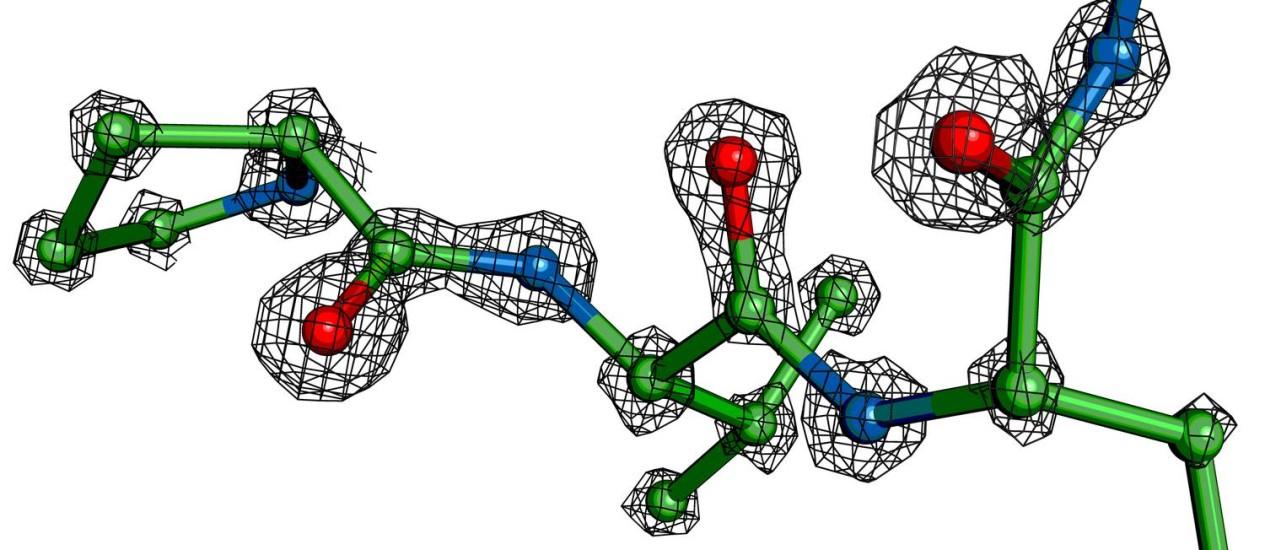 Ilustração mostra a densidade de elétrons em torno dos átomos de parte de uma molécula de proteína presos em um estágio de transição de alta energia: marcas de processo fundamental para a vida Foto: Andrew E. Brereton/Universidade do Estado do Oregon