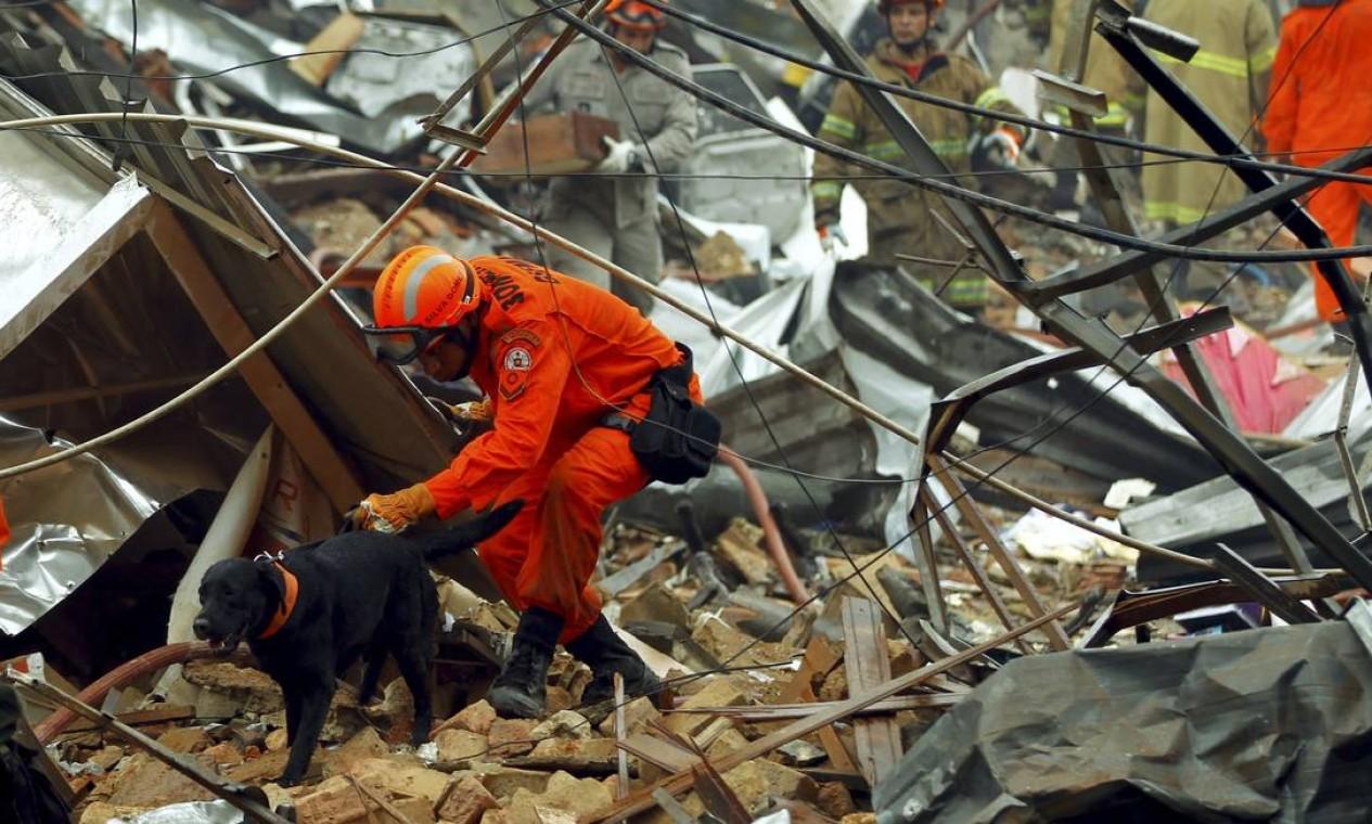 Bombeiros usam cães ferejadores nas buscas por pessoas soterradas Foto: Gabriel de Paiva / Agência O Globo