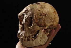 Crânio de Homo Florensiensis Foto: AP