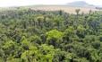 Área onde deve ser criada a estação ecológica de proteção do jequitibá-rosa