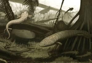 Sapo de fogo (Procuhy nazariensis, à direita) dividia lagos do Piauí com sua presa, Timonya anneae Foto: Divulgação/Andrey Atuchin