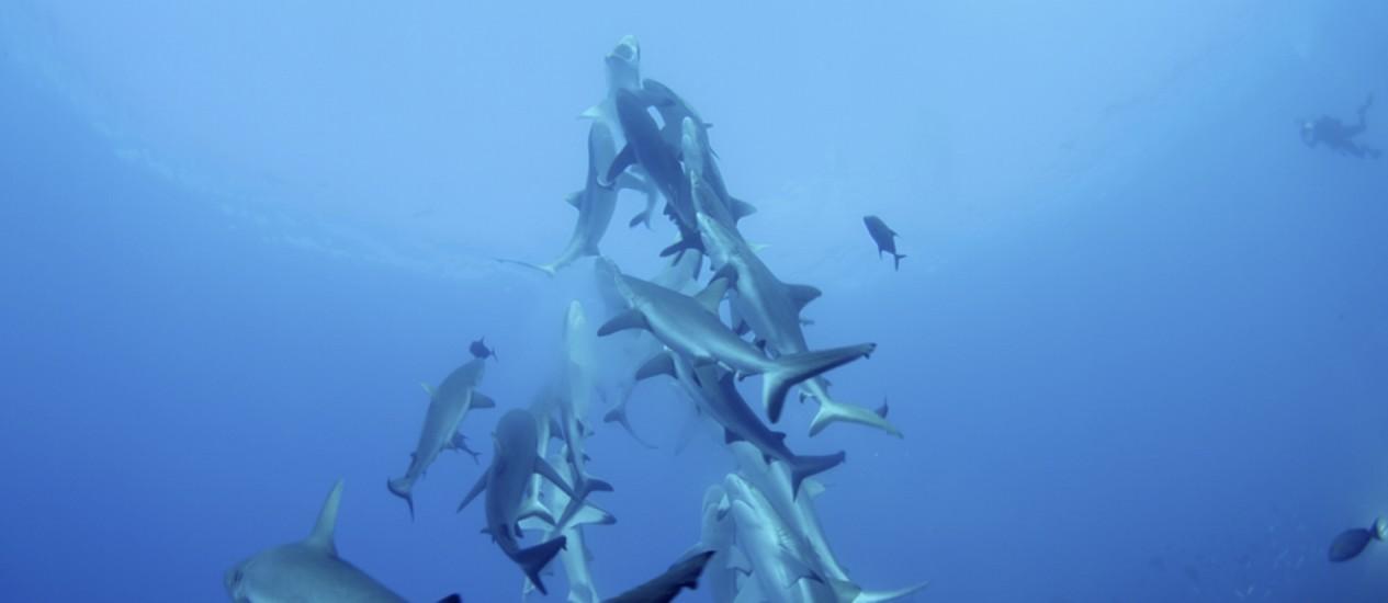 Equipes de filmagens registraram comportamento dos animais Foto: Divulgação