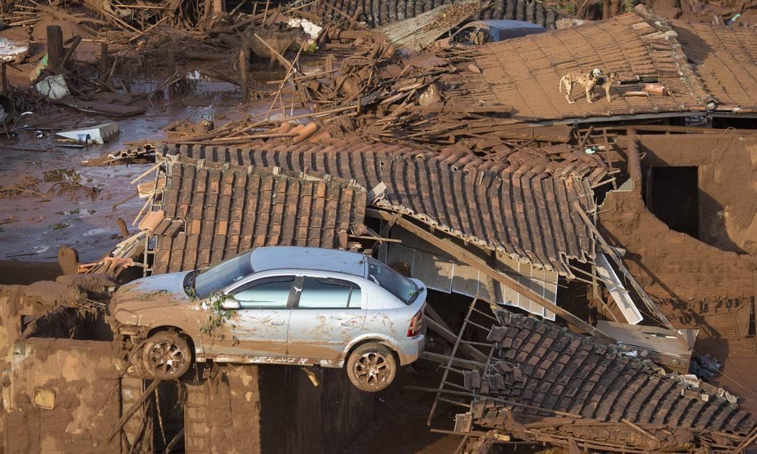 Um carro e dois cães são vistos no telhado de casas destruídas Foto: Felipe Dana / AP
