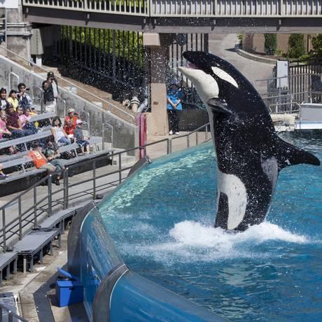 Orca se apresenta para plateia no SeaWorld de San Diego, na Califórnia Foto: MIKE BLAKE / REUTERS