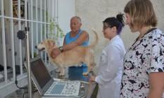 Pet azul. Atividade alertou para o risco de câncer nos animais Foto: Fátima Leite / Divulgação