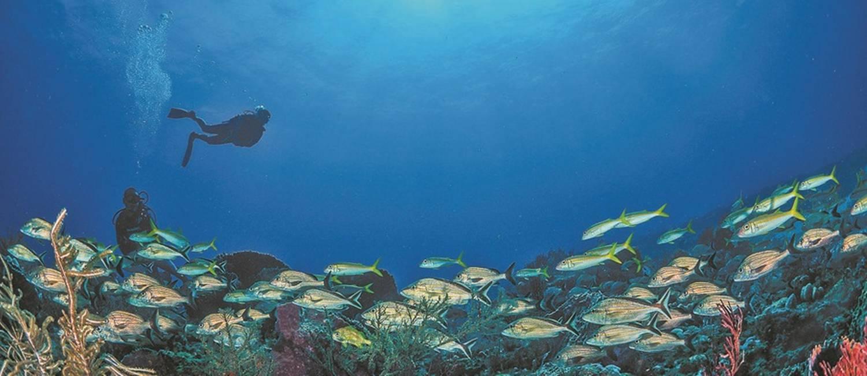 Mergulhador observa as cores vivas do fundo do mar Foto: Gabriela Valente / Agência O Globo