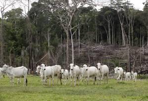Desmatamento na Região de Xapuri no Acre Foto: Gustavo Stephan/ 05-12-2013