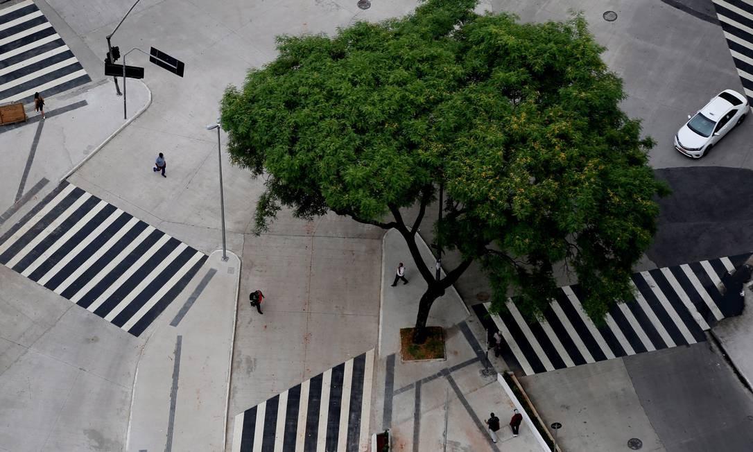 VERDE SOBRE CINZA. Árvore cercada por faixas de pedestres no centro de São Paulo Foto: Fernando Donasci / Agência O Globo