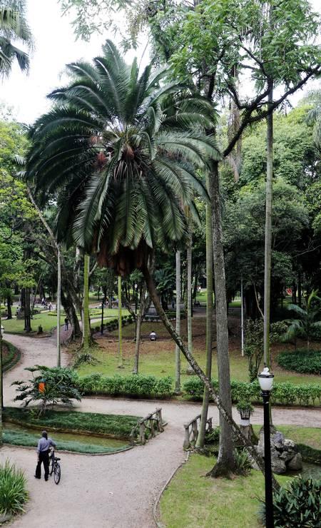 CENTENÁRIO. Jardim da Luz, parque do século XIX na região central da cidade Foto: Fernando Donasci / Agência O Globo