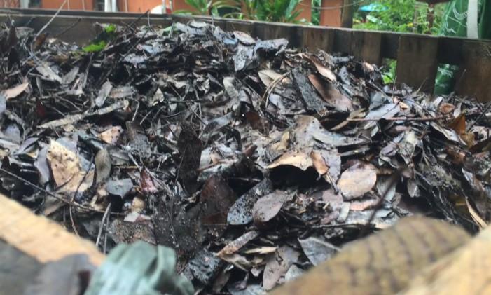 Folhas secas ajudam na decomposição Foto: Guilherme Ramalho