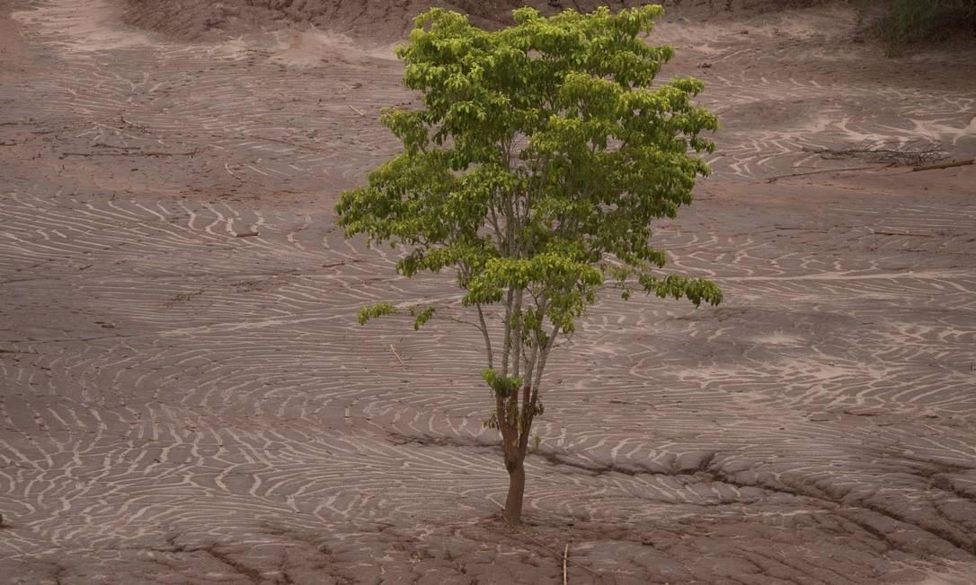 Natureza tenta reagir ao desastre em uma recuperação lenta Foto: Márcia Foletto / Agência O Globo