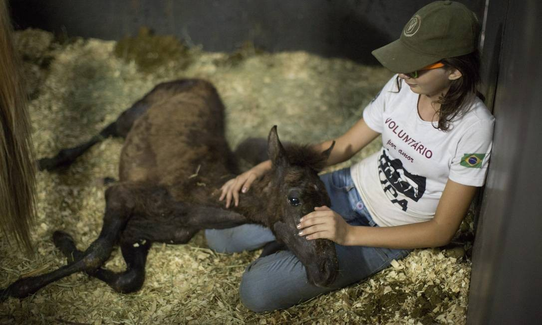 A voluntária Amelinha, de 11 anos, cuida de um potro retirado da lama por equipes de resgate: muitos animais que sobreviveram à tragédia sofreram mutilações Foto: Márcia Foletto / Agência O Globo