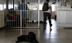 Um cachorro deitado na entrada do hospital: segundo pacientes, animais costumam circular entre eles Foto: Pablo Jacob / Agência O Globo