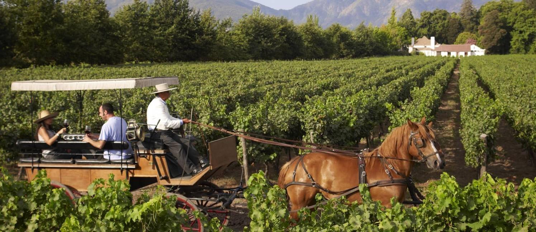 Passeio de charrete na vinícola Viu Manent Foto: Divulgação / Divulgação