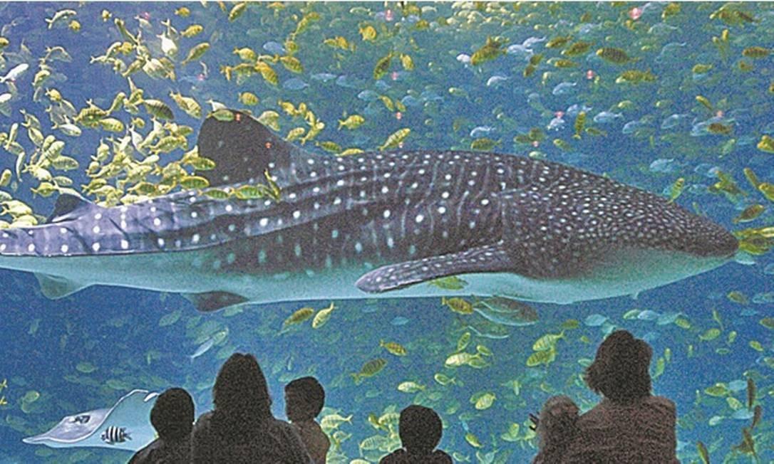 Cinco dicas: aquários pelo mundo