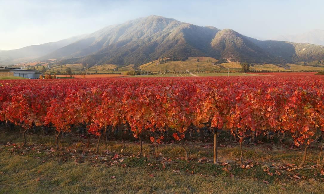 No terreno da vinícola Montes, há parreiras em 140 hectares Foto: Divulgação