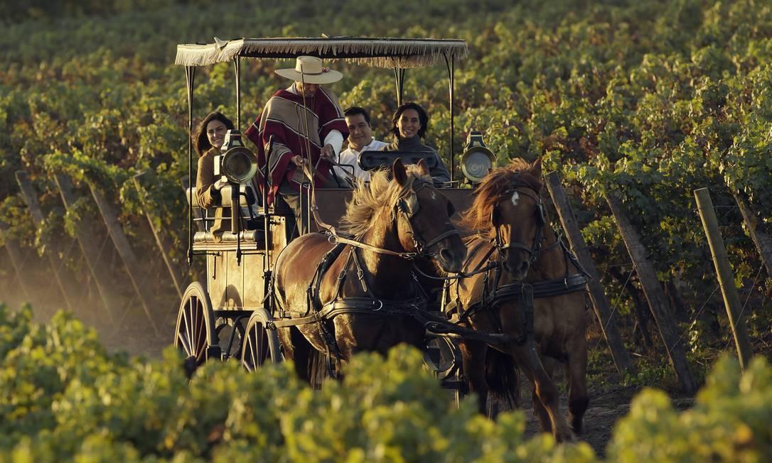 A Viu Manent é uma vinícola tradicional do Chile Foto: Matt Wilson / Divulgação