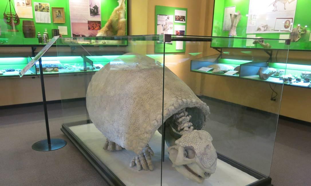O museu possui uma área com fósseis Foto: Cláudia Meneses / O Globo