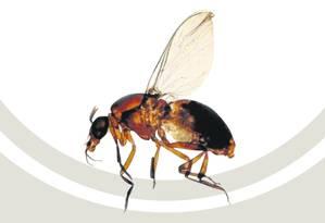 A síndrome viral é dolorosa e transmitida por insetos Foto: O Globo