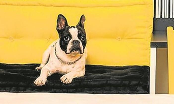 Cachorro em suíte da rede Íbis Foto: Divulgação