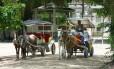 Cavalos usados durante passeios na Ilha de Paquetá