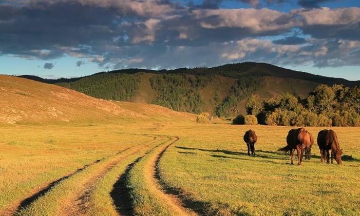 Cavanos nas estepes da Mongólia Foto: Wild Frontiers / Reprodução / CNN