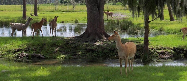 Vida animal: no Wilderness Ranch Foto: Divulgação