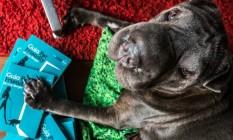Guia para curtir a cidade com cães Foto: Divulgação
