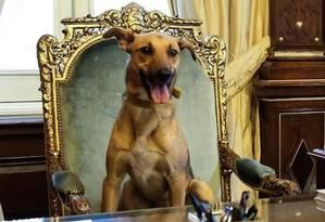 Mascote. Foto na cadeira presidencial teve mais de 260 mil curtidas Foto: Reprodução