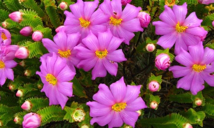 Resultado de imagem para imagens de flores raras