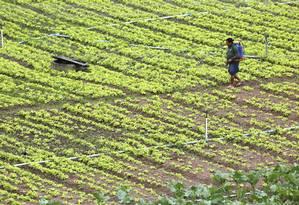 Trabalhadora espalha produtos fertilizantes na plantação, em Teresópolis, no Rio de Janeiro. Este é um dos grandes vilões responsáveis pelo aumento excessivo da pegada de nitrogênio Foto: Custódio Coimbra / Agência O Globo