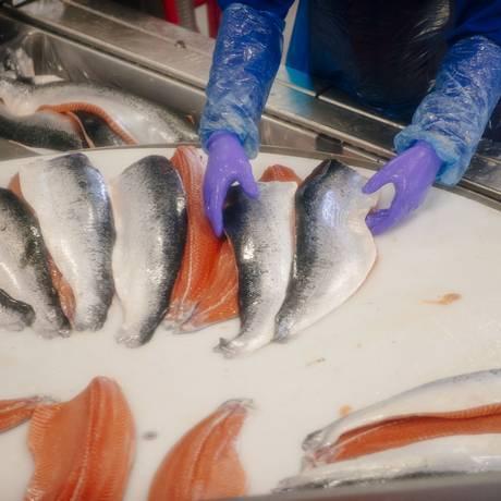 Filés de salmão em fábrica na Noruega Foto: Kristian Helgesen / Bloomberg/8-9-2014