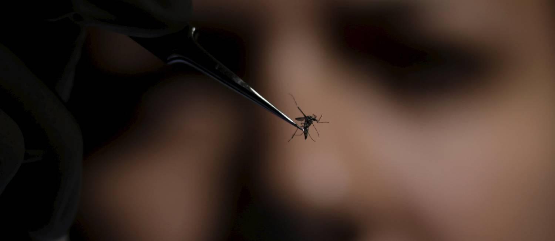 Mosquito passa por análise na Fundação Oswaldo Cruz, no Rio: Brasil tem 270 casos de microcefalia confirmados; apenas seis têm ligação com o vírus zika Foto: Ueslei Marcelino / Reuters