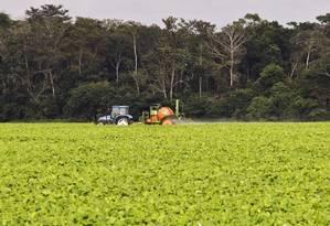Plantação de soja na beira de uma estrada no Mato Grosso: expansão sem monitoramento da área ocupada por commodities compromete integridade do ecossistema Foto: Guito Moreto