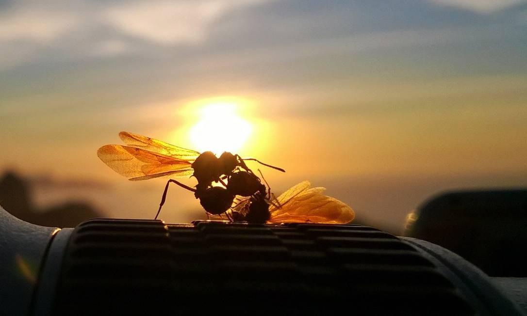Insetos: estudo mostra que humanos dividem suas casas com centenas de espécies de moscas, aranhas, besouros, piolhos e outros artrópodes Foto: Thiago Lontra / Thiago Lontra