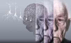 Estudo diz que comer ao menos uma refeição semanal de peixe ou frutos do mar ajuda a proteger o cérebro de alterações ligadas ao desenvolvimento do mal de Alzheimer Foto: Latinstock