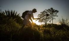 Cássio Garcez trabalha no reflorestamento do Morro da Peça Foto: Guilherme Leporace