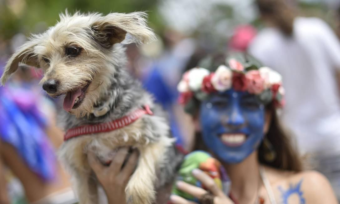 A foliã levou seu animal de estimação para a folia em Belo Horizonte Douglas Magno / AFP